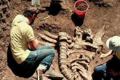 Dig site at Tambar Springs