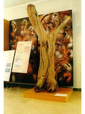 Boomerang Tree