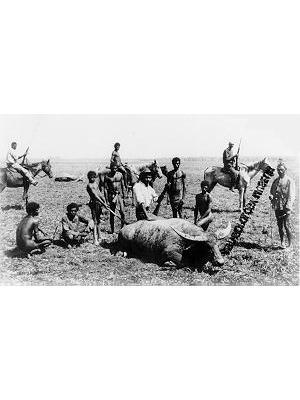 Among Disabled Buffaloes