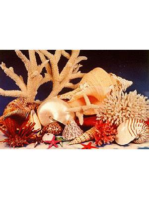 Coral and Shell Display
