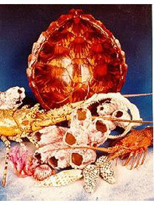 Turtle and Crayfish Display