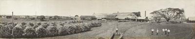 Mourilyan Mill, 1927