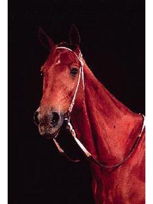 Phar Lap (Equus Caballus)