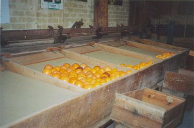 Fruit Grader for Oranges