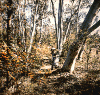 Wirrimbirra Sanctuary