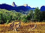 Warrumbungle National Park, Coonabarabran