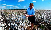 Cotton farming near Moree.