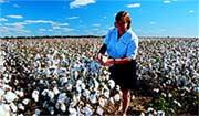 Cotton farming near Moree.