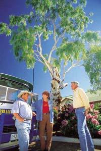 Tree of Knowledge with Tom Lockie, Barcaldine